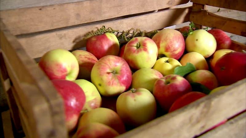 Як зберігати яблука