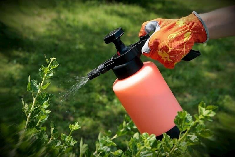 Захист рослин від шкідників