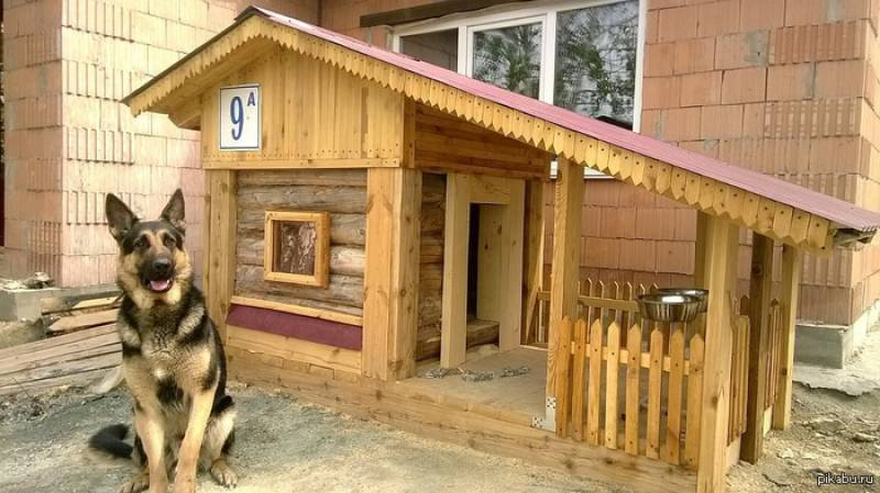 Як побудувати будку для німецької вівчарки