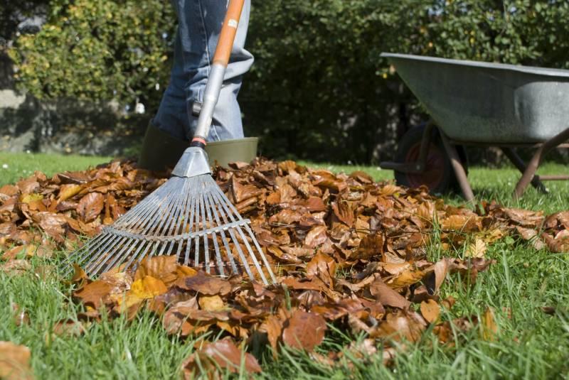Догляд за газоном восени і підготовка його до зими