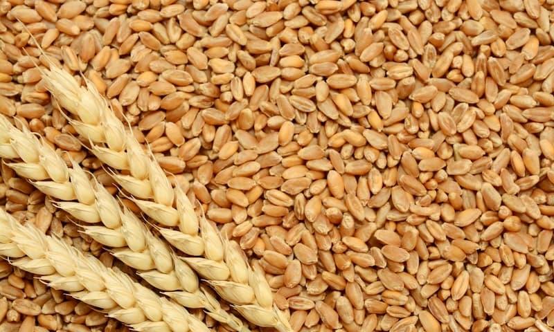 Как определить класс пшеницы?