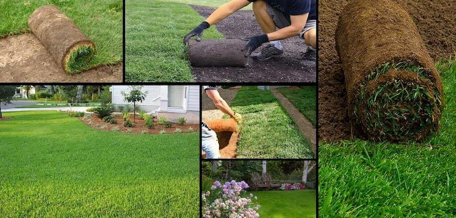 Рулонный газон: процесс укладки